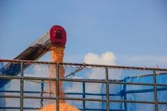 Maisernte auf Ackerland Lizenzfreie Stockfotografie