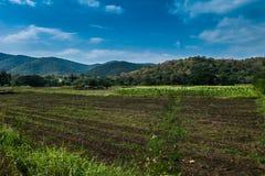 Maisernte, die für einen neuen Erntegebirgs- und -himmelhintergrund sich vorbereitet Lizenzfreie Stockbilder