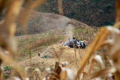 Maisfeld auf dem Hügel Lizenzfreies Stockfoto