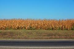 Maisfeld durch die Landstraße gegen blauen Himmel Stockfotos