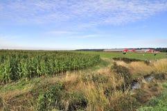 Maisfeld durch einen Abzugsgraben Stockfoto