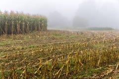 Maisfeld im Morgennebel - Frankreich Stockbild