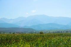 Maisfeld inear die Berge Lizenzfreies Stockfoto