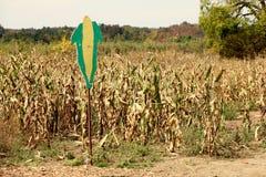 Maisfeld mit einem Zeichen einer Maishülsen, welche die Ernte identifiziert Stockfoto