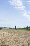Maisfeld nach der Ernte Stockfotografie