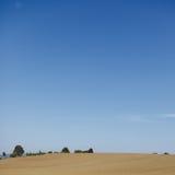 Maisfeld und blauer Himmel Stockbild