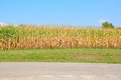 Maisfeld und blauer Himmel Lizenzfreies Stockbild