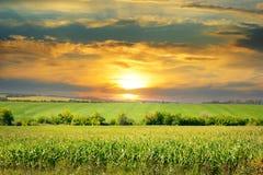 Maisfeld und Sonnenaufgang Lizenzfreies Stockfoto