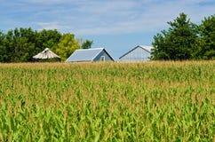 Maisfeld und Ställe Stockbild