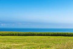 Maisfelder durch das Meer Lizenzfreie Stockfotos