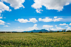 Maisfelder im Tal Stockbild