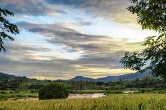 Maisfelder mit dem Flussfließen stockfoto