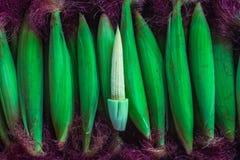 Maisgrünabschluß oben Lizenzfreies Stockfoto