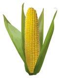 Maiskörner. Stockbild