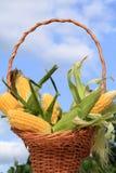 Maiskörner Stockfotografie