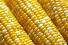 Maiskörner Stockfoto