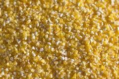 Maiskörner Stockbilder