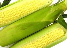 Maiskörner lizenzfreie stockfotos