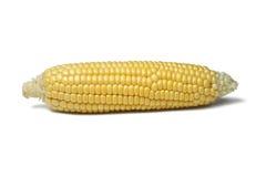 Maiskörner Stockbild