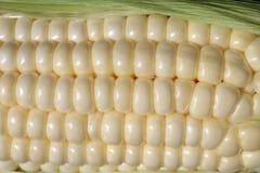 Maiskörner-Kerne Stockfoto
