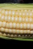 Maiskörner-Kerne Stockfotografie