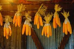 Maiskolben, die hängen, um mit Hintergrund des alten Fensters zu trocknen Abbildung der roten Lilie Stockfotos