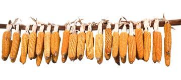 Maiskolben, die hängen, um zu trocknen Lizenzfreie Stockfotos
