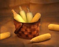 Maiskolben in einem Korb Lizenzfreies Stockfoto