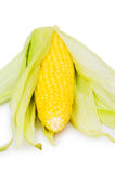 Maiskolben getrennt auf dem Weiß Lizenzfreies Stockbild
