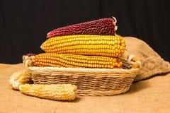 Maiskolben im Weidenkorb Stockbilder