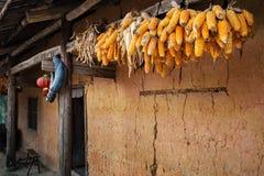 Maiskolben und Sojabohnen mit einer chinesischen Laterne trocknen gehangen über den Eingang eines hmong Hauses in Hà Giang Provin lizenzfreie stockbilder