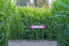Maislabyrinth mit Richtungszeichen lizenzfreies stockfoto