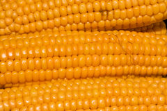 Maisohren Lizenzfreies Stockbild