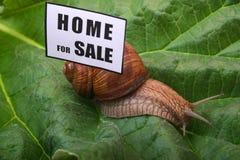 Maison à vendre Photographie stock