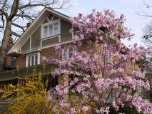 maison avec la magnolia photographie stock