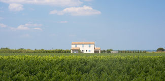 Maison blanche dans Camargue (Provence) Photo libre de droits