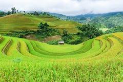 Maison d'échasse sur le gisement en terrasse de riz avec le ciel et les nuages image libre de droits