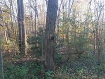 Maison d'abeille avec des trous sur l'arbre dans la forêt photos stock