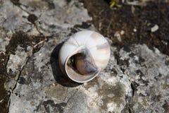 Maison d'escargot Photos libres de droits