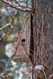 Maison d'oiseau. Élevage de cabine sur l'arbre Photographie stock