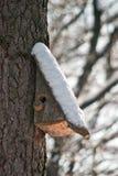 Maison d'oiseau. Élevage de cabine sur l'arbre Photo libre de droits
