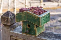 Maison d'oiseau avec un toit vert vivant Photo libre de droits