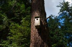 Maison d'oiseau dans la forêt Photographie stock