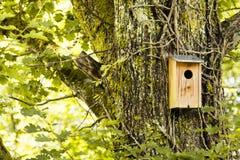 Maison d'oiseau dans une forêt Images libres de droits