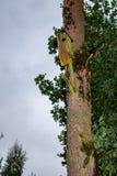 Maison d'oiseau pendant de l'arbre avec le trou d'entrée sous forme de cercle image stock