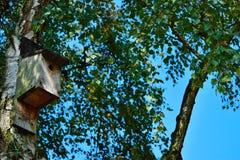 Maison d'oiseau sur un arbre de bouleau Images libres de droits
