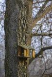 Maison d'oiseaux Image libre de droits