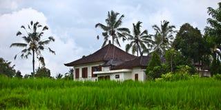 Maison dans le domaine de riz Images stock