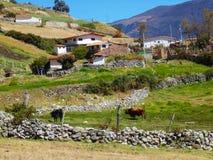 Maison de campagne avec des bétail frôlant sur les collines avec un contexte des montagnes image stock