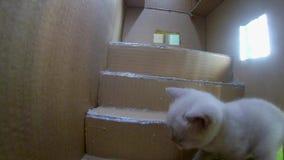 Maison de carton de chats banque de vidéos